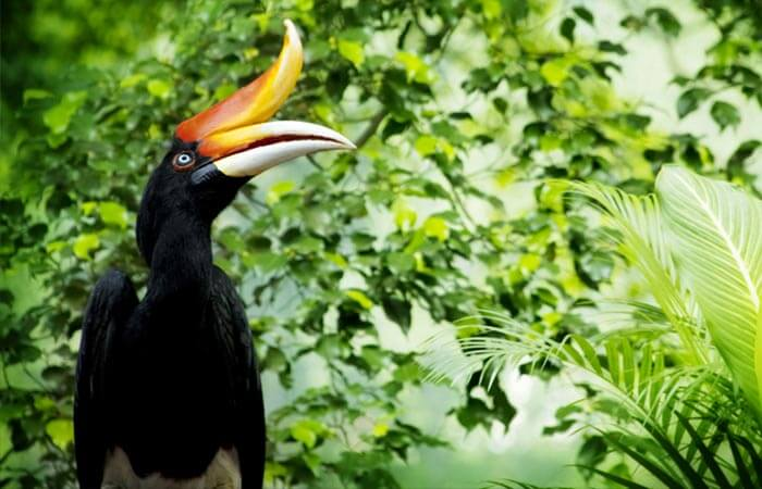 Sarawak - Explore land of the Hornbills