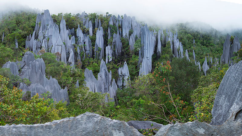 Mulu Pinnacles and Caves + Miri