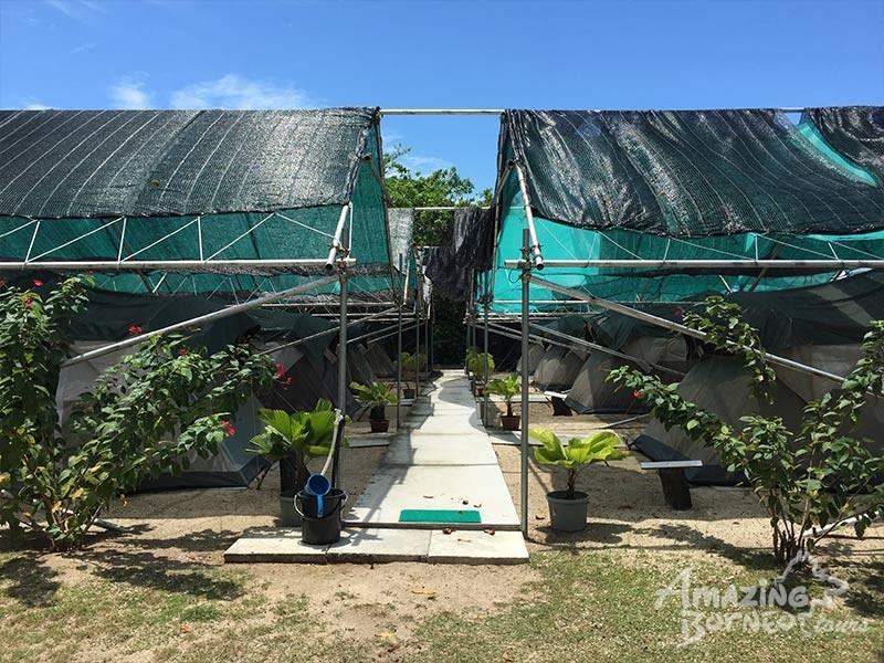 glamping spacious tent at Sabah