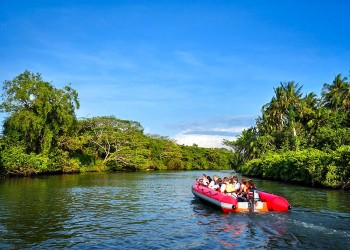 Kawa Kawa River Cruise - Wildlife & Fireflies