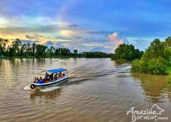 Klias Wildlife Safari River Cruise - Proboscis Monkey & Fireflies