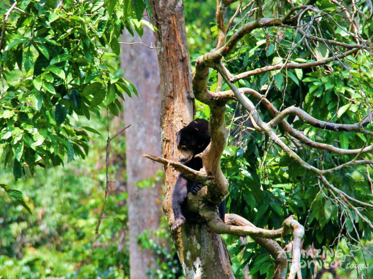 A Journey Through Sabah - 10 Days - Amazing Borneo Tours