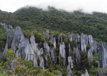 4D3N Mulu Pinnacles & Show Caves