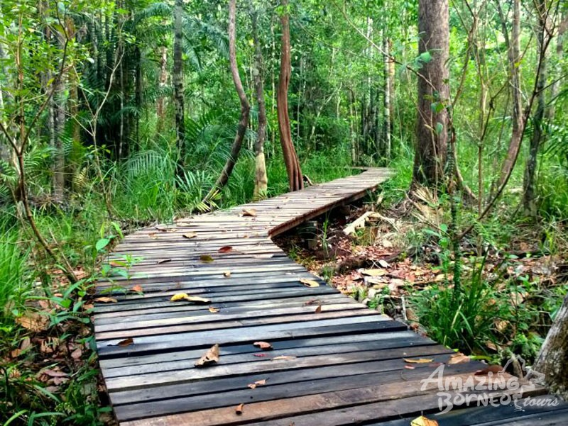 2D1N Abai Kinabatangan Wetlands Resort - Amazing Borneo Tours