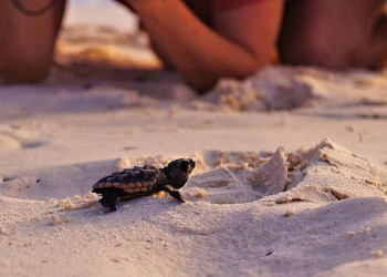 3D2N STARLIGHT WITH TURTLES, SUNRISE WITH ORANGUTANS - LIBARAN ISLAND / SEPILOK