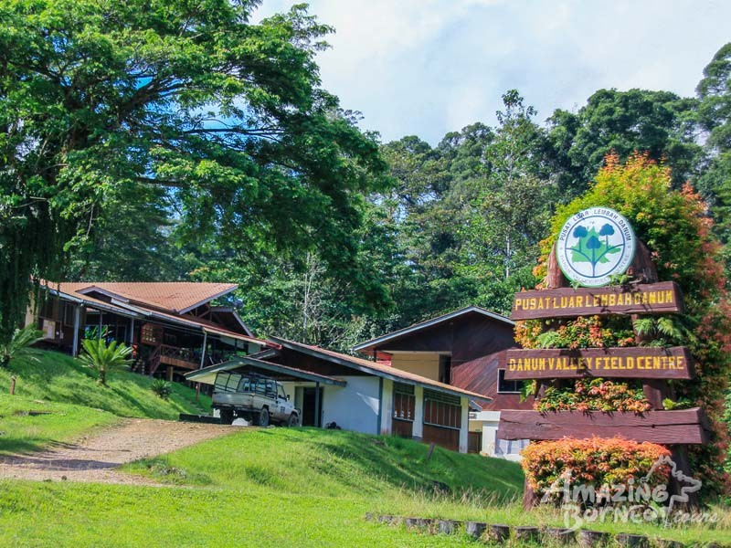 3D2N Danum Valley Field Centre - Nature Lover Experience (Budget) - Amazing Borneo Tours