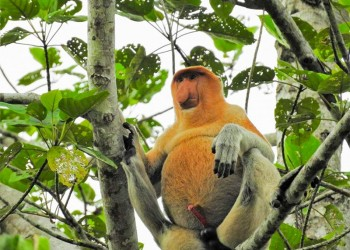 2D1N BORNEO NATURAL SUKAU BILIT RESORT - KINABATANGAN RIVER CRUISES & JUNGLE WALK (BUDGET)