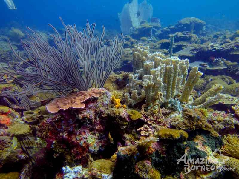 SeaTango's Ballroom - A newly discovered dive site in Sabah! - Amazing Borneo Tours