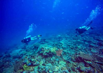 SeaTango's Ballroom - A newly discovered dive site in Sabah!