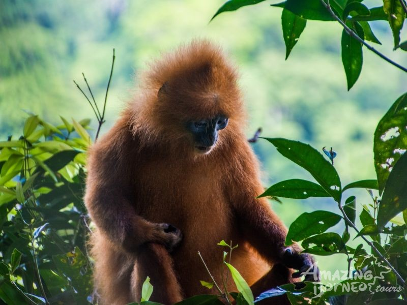 5D4N JEWELS OF DANUM VALLEY COMBO  - Amazing Borneo Tours