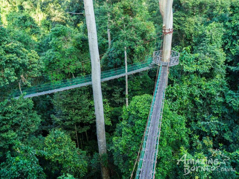 5D4N WONDERS OF KINABATANGAN RIVER & DANUM VALLEY  - Amazing Borneo Tours