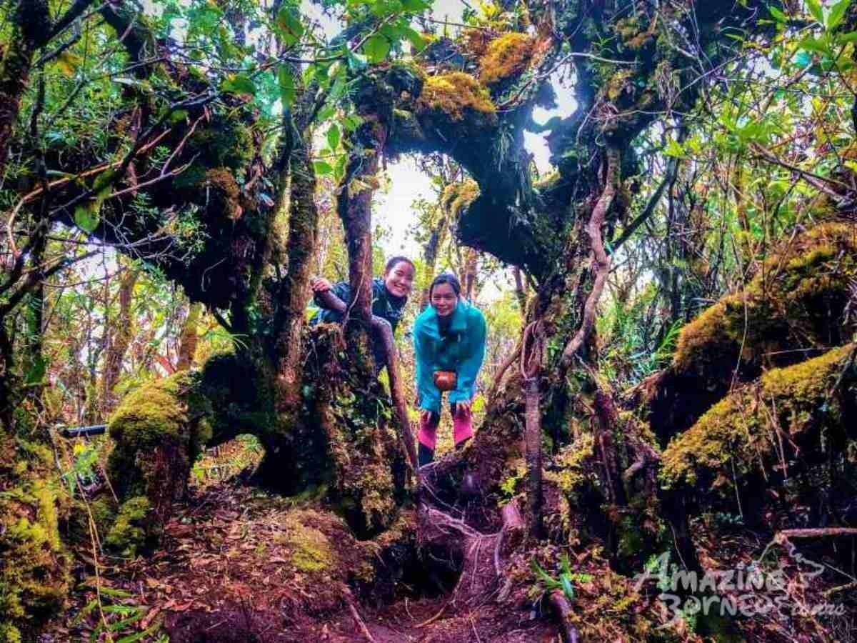 1 Day Kinabalu Crocker Range Trek Maragang Hill 2 232m Amazing Borneo Tours