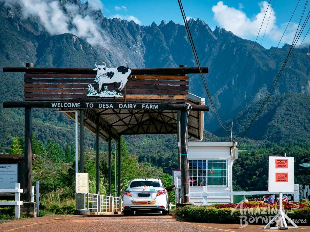 Kundasang ATV & Desa Cow Farm Adventure - Amazing Borneo Tours