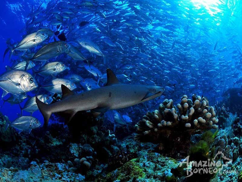 Mataking Island - The Reef Dive Resort - Amazing Borneo Tours