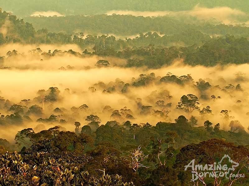 3D2N Borneo Rainforest Lodge - Danum Valley Rainforest Beauty Experience - Amazing Borneo Tours