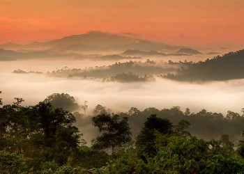 Danum Valley Rainforest Beauty Experience