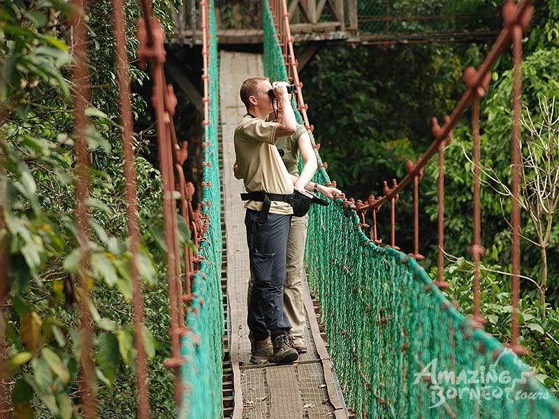 4D3N Borneo Rainforest Lodge - Danum Valley Rainforest Adventure Print & Danum Valley- Danum Valley Rainforest Adventure - Amazing Borneo Tours