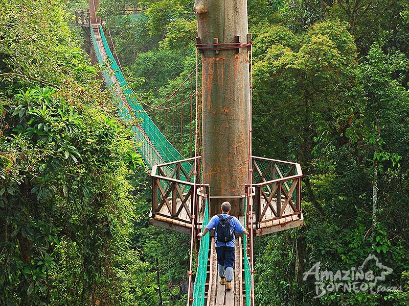 Image result for Danum Valley