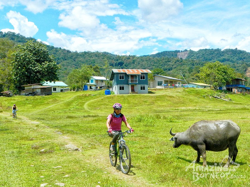 Cycling - Kiulu Countryside Ride (Intermediate) - Amazing Borneo Tours