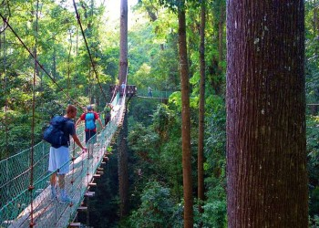 Borneo Jungle Trek - 4D3N Maliau Basin (Sabah's Lost World)