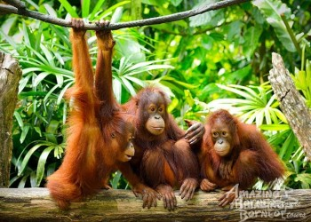 Wildlife Spotting in Borneo – How to See More!