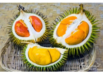 Myths And Facts About The Durian