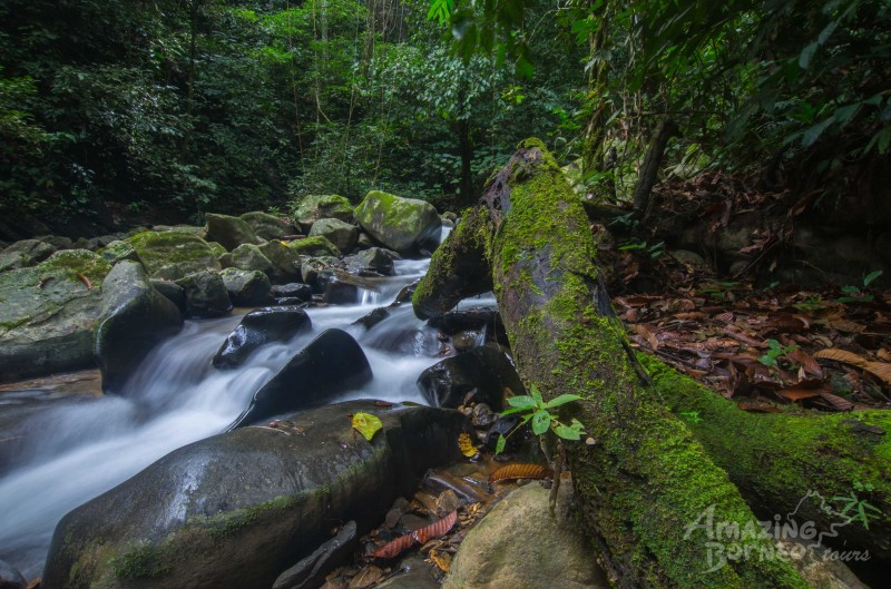2.2 Million Acres of New Protected Jungle In Sarawak
