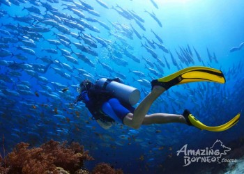 10 Things You Need to Know Before Your Diving Trips in Sabah