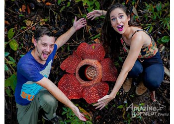 Hunting the world's largest flower with Dear Alyne