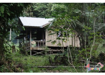 "Borneo Jungle Trekking - ""Survival Camp"""